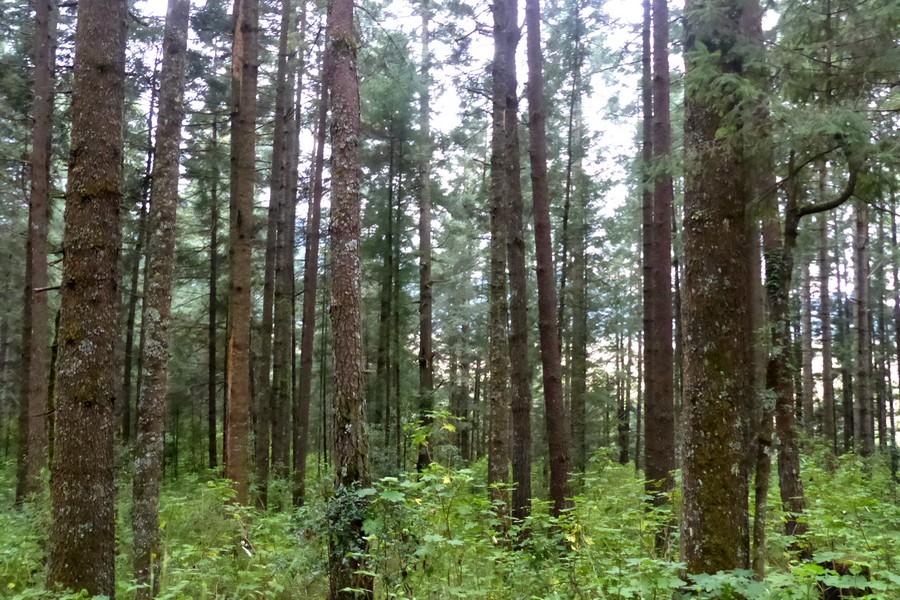 Theme forêt © Lardaux